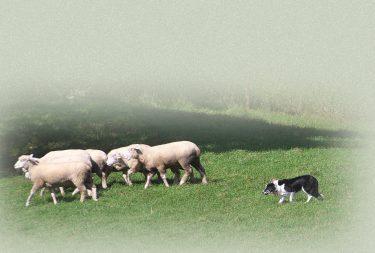 【コラム&クイズ】犬種グループ | 10グループに分類される理由とそれぞれの特徴とは